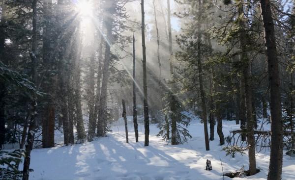 SnowFallinTrees